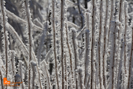 semegnjevska-zimska-idila-03-predrag-supurovic